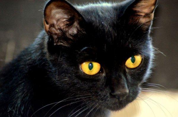Mladá čierna dievča chlpaté mačička