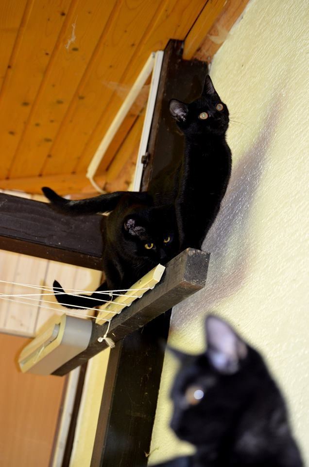 Chlpaté mačička dievčatá