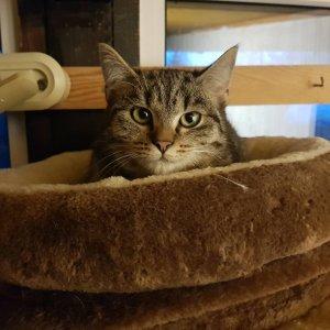 Tesné opuchnuté mačička